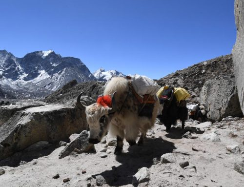 From sledding accident to Everest Base Camp